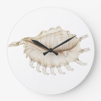 Spider Conch Shell in Coloured Pencil Wall Clock