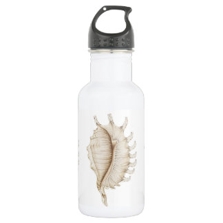 Spider Conch Shell in Coloured Pencil Water Bottle 532 Ml Water Bottle