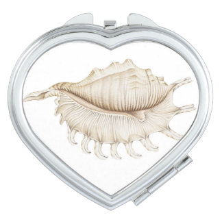 Spider Conch Shell in Pencil Compact Mirror