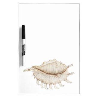 Spider Conch Shell in Pencil Dry Erase Board