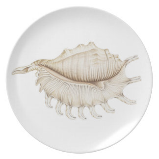 Spider Conch Shell in Pencil Melamine Plate