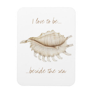 Spider Conch Shell in Pencil Photo Magnet