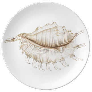 Spider Conch Shell in Pencil Porcelain Plate
