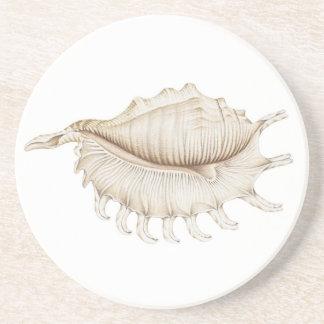 Spider Conch Shell in Pencil Sandstone Coaster