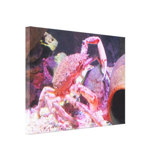 Spider crab stretched canvas print