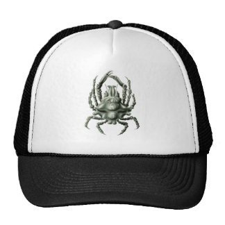 Spider Crab Cap