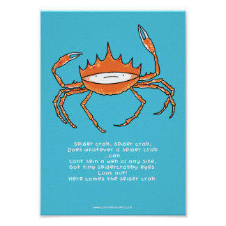 Spider crab, spider crab A4 poster
