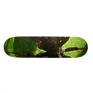 Spider Crawling on Leaf Skateboards