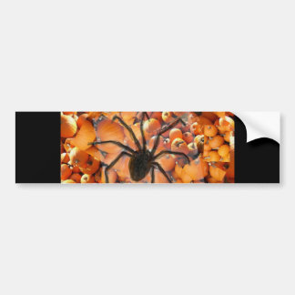 Spider crawling on the pumpkins. bumper sticker