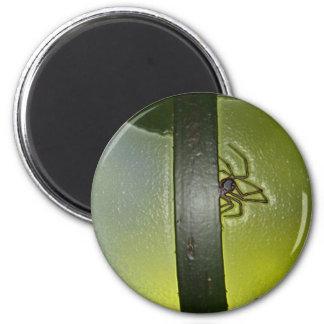 spider d 6 cm round magnet