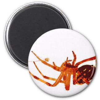 spider e 6 cm round magnet