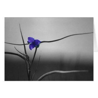 spider flower card