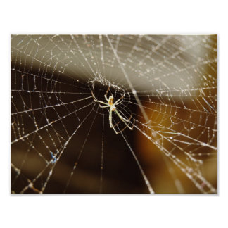 Spider in web poster
