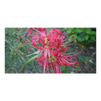 Spider Lily Bloom Personalised Photo Card