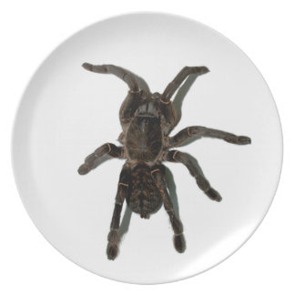Spider lovers dinner plates