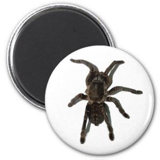Spider lovers magnet
