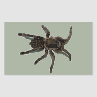 Spider lovers rectangular sticker