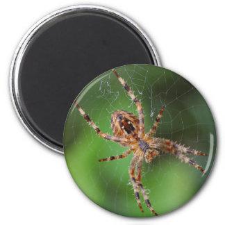 Spider Refrigerator Magnets