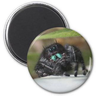 Spider! Refrigerator Magnets