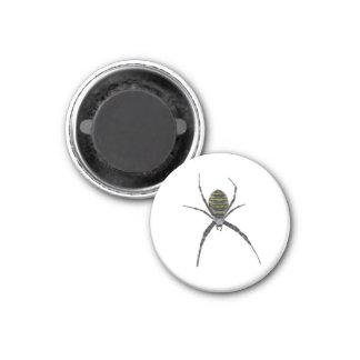 Spider Refrigerator Magnet