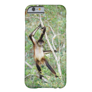 Spider monkey at the Belize Zoo Barely There iPhone 6 Case