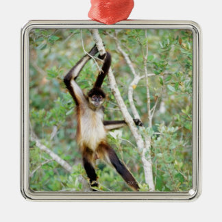 Spider monkey at the Belize Zoo Christmas Ornament