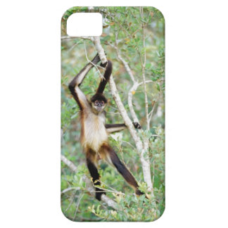 Spider monkey at the Belize Zoo iPhone 5 Case
