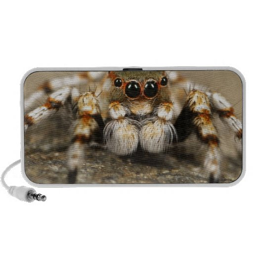 Spider Nature Animals  Wild  insects Speaker