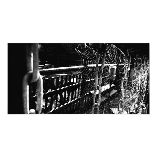 spider-network photo cards