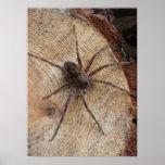 Spider On a Log Print