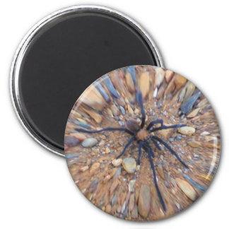 Spider on rocks 6 cm round magnet