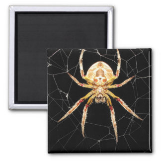 Spider On Web Square Magnet