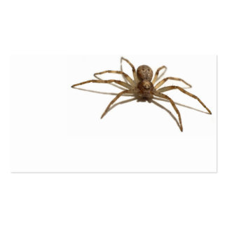 Spider Pack Of Standard Business Cards