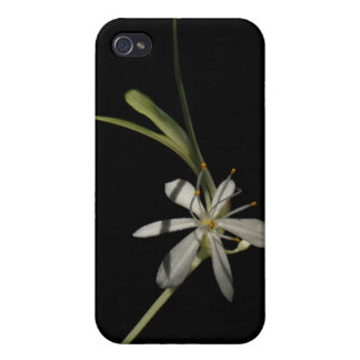 Spider Plant Flower ~ case Cases For iPhone 4