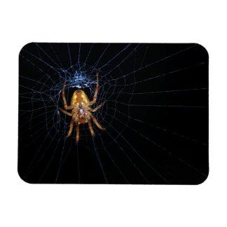 Spider Rectangular Photo Magnet