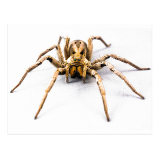 Spider Sense Postcard