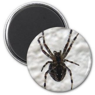 Spider Spider 6 Cm Round Magnet