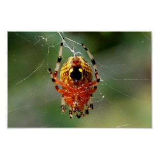 Spider Spin 12x8 Poster