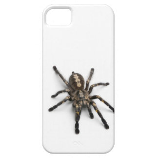 Spider tarantula i phone case, double protection! iPhone 5 case