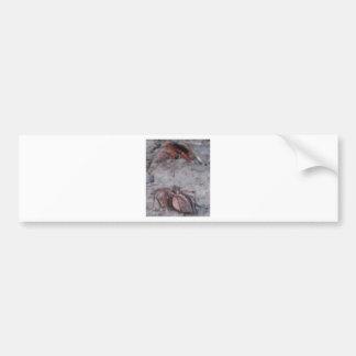 Spider & Wasp Bumper Sticker