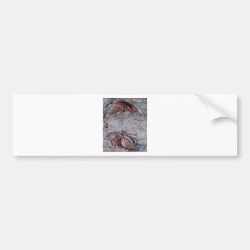 Spider & Wasp Bumper Stickers