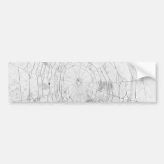 Spider web bumper sticker