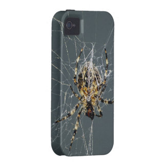 Spider & Web Insect iPhone Case iPhone 4/4S Covers