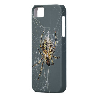 Spider & Web Insect iPhone Case iPhone 5 Cases