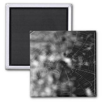 Spider webs make compelling shapes. square magnet