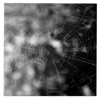 Spider webs make compelling shapes. tile