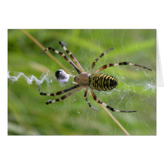 Spider with prey card