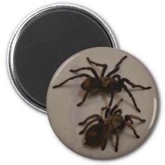 spiders 6 cm round magnet