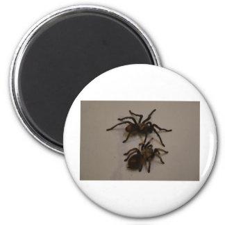 spiders refrigerator magnets