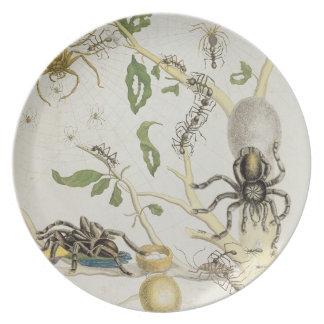 Spiders: Mygole, plate 18 from 'Over de Voorteelin